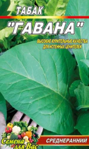 Tobacco-gavana