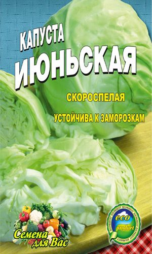 Cabbage-iyunskaya-ranniy-sort