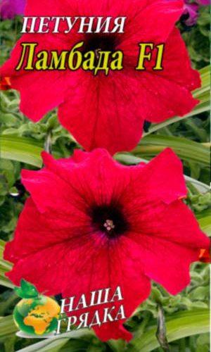 Petunia-lambada