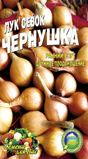 Onion-sevok-chernushka