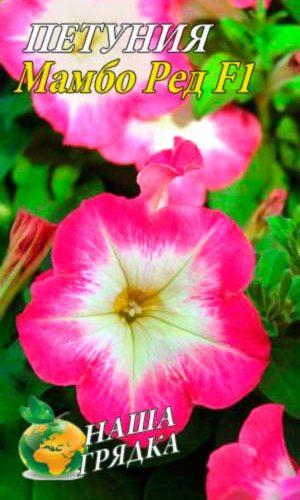 Petunia-mambo-red