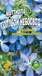 mattiola-dvurogaya-goluboy-nebosvod
