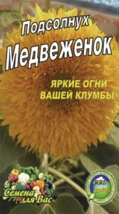 Sunflower-decorative-medvezhenok