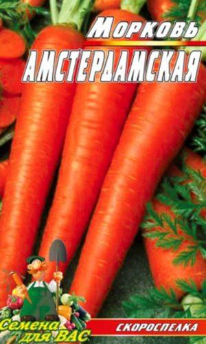 carrot-amsterdamskaya