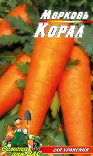 carrot-koral