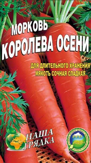 Carrot-koroleva-oseni