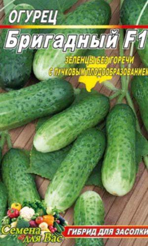 Cucumber-brigadnyiy