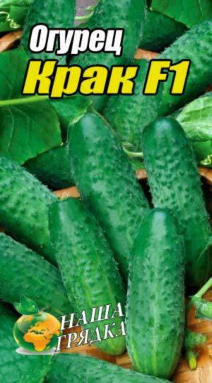 Cucumber-krak-F1
