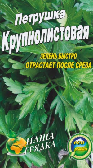 Parsley-krupnolistovaya