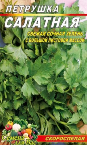 Parsley-listovaya-salatnaya