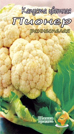 Cauliflower-pioner