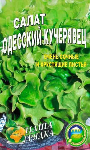 salat-odesskiy-kucheryavyiy