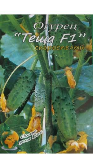 Cucumber-teshha-f-1