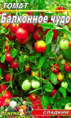 tomato-balkonnoe-chudo