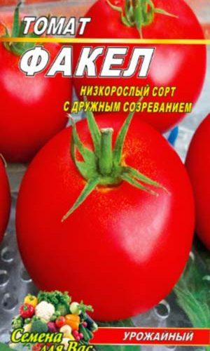 tomato-fakel