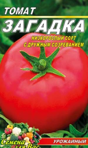 tomato-zagadka