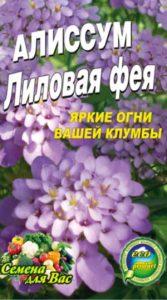 alissum-lilovaya-feya