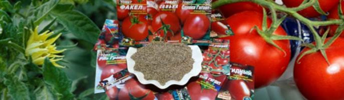 купить семена томатов