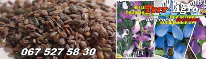 Семена маттиолы купить