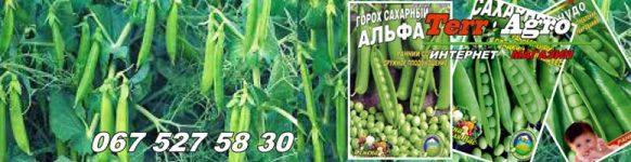 Выращивание сахарного гороха на грядке: посев, правила ухода