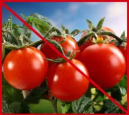 Голландские сорта помидор