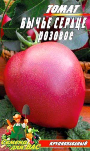 томат-бычье-сердце-розовое